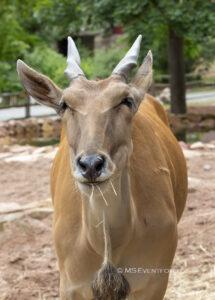 Zoo verzeichnet positive Besucherresonanz