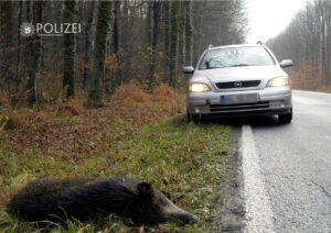 Aktuell viele Wildunfälle