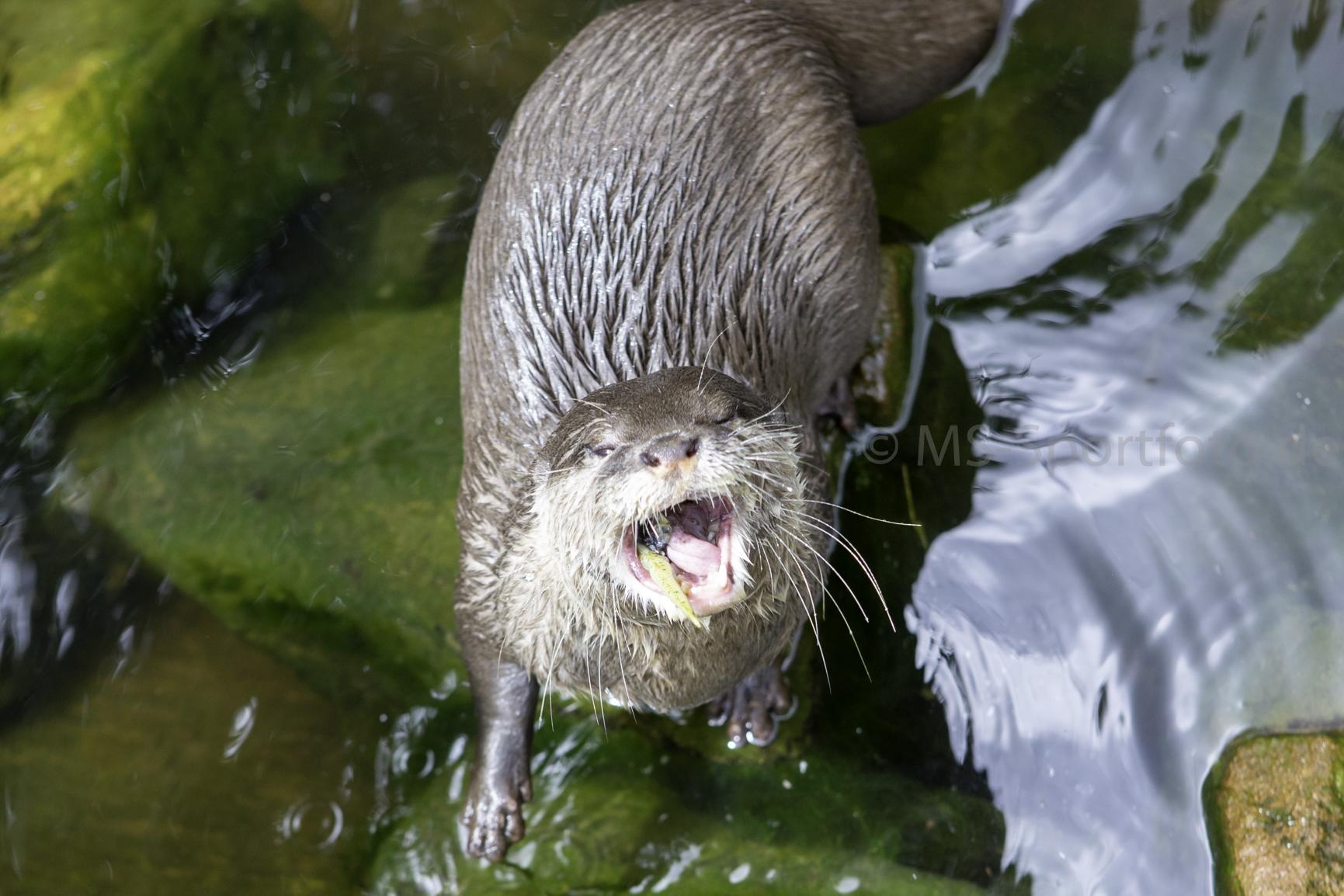 Schwimmen und Spenden zugunsten des Siegelbacher Zoos