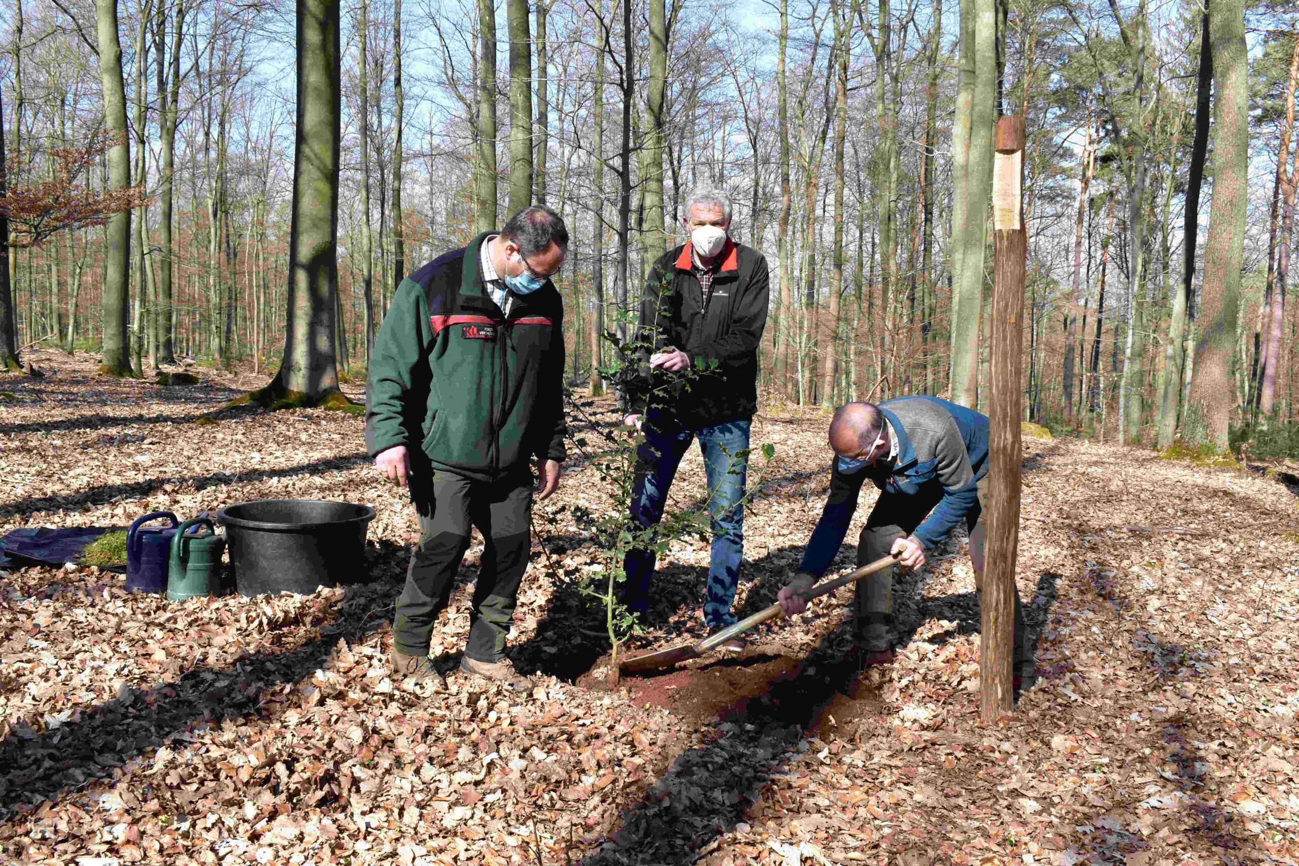 Kiefer pflanzt Baum des Jahres 2021 im Wildpark
