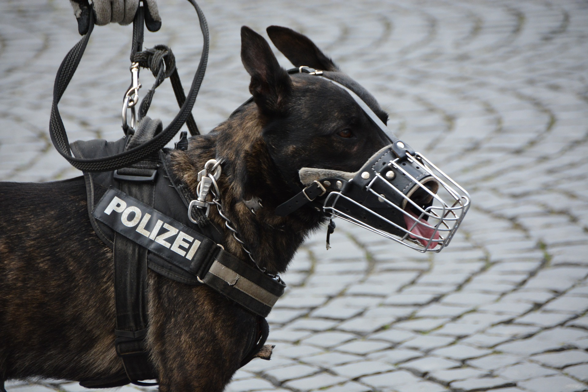 Bundespolizei Kaiserslautern ermittelt gegen gewaltbereite regionale Sprayerbande
