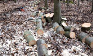 Bäume unerlaubt gefällt und mitgenommen