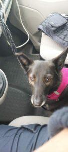 Hund auf der Autobahn hält Polizei auf Trab